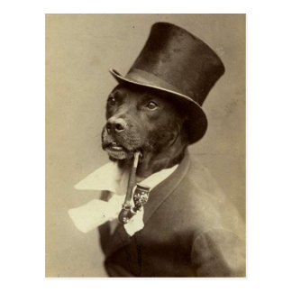 Funny Vintage Photo of Dog in Top Hat Postcard