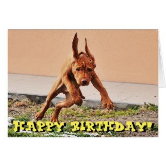 Funny vizsla puppy birthday card