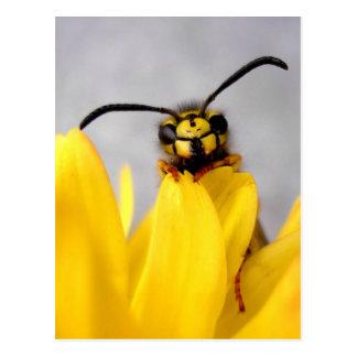 Funny Wasp Postcard Carte Postale
