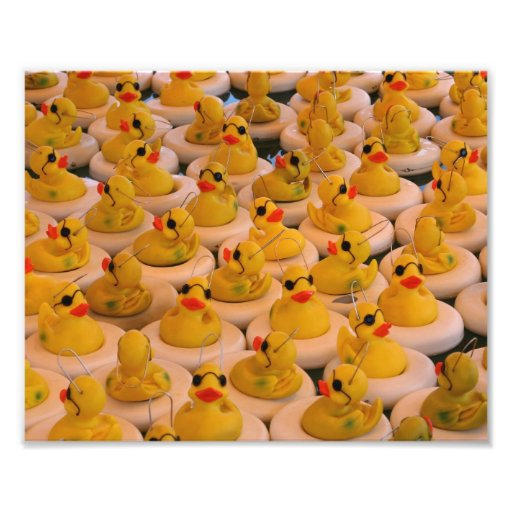 Funny Yellow Rubber Ducks 10x8 Print Photograph