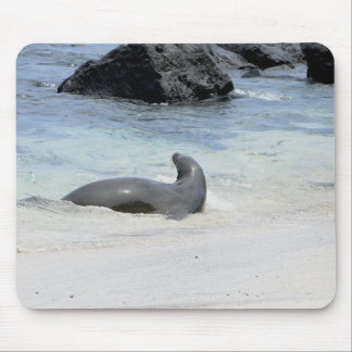 fur seal in to water mouse pad