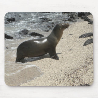 fur seal of the Galapagos Mouse Pad