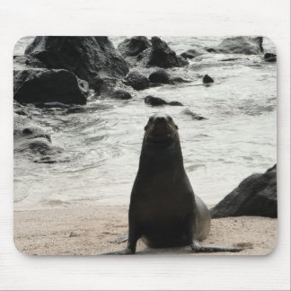 fur seal on the beach mouse pad