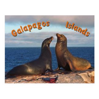 Fur seals postcard