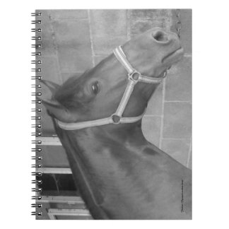 Furioso #7 notebook