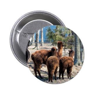Furry Brown Alpaca Behinds Pinback Button