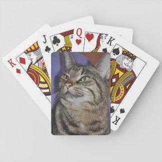 Furry Friend-Gray Tiger Stripe Cat Poker Deck