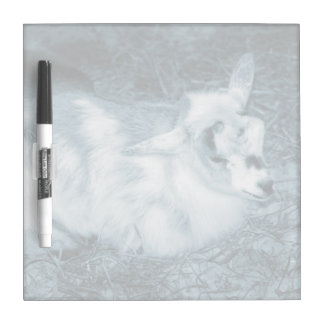 Furry small blue goat doeling baby right dry erase whiteboards