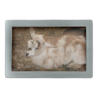 Furry small goat doeling baby belt buckles