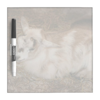 Furry small goat doeling baby Dry-Erase whiteboards