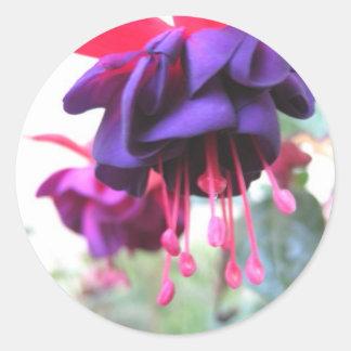 Fuschia flower, purple and hot pink classic round sticker