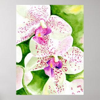 Fuschia Orchid Print