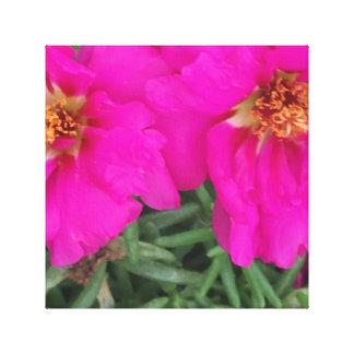 Fuscia blooms canvas print