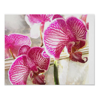 fushcia orchids poster