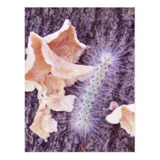 fuzzy caterpillar and fungi postcard