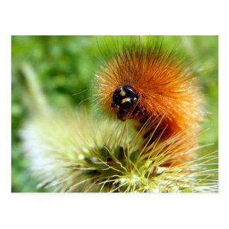 Fuzzy Caterpillar Postcard