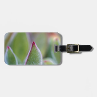 Fuzzy Green Succulent Leaves Macro Bag Tag