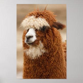 Fuzzy Llama Poster