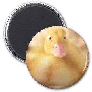 Fuzzy Yellow Duck Easter Baby Duckling Magnet