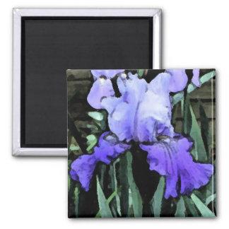 FX- Blue Iris Magnet