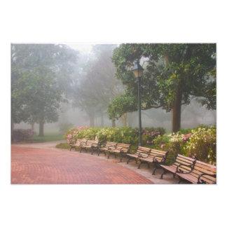 GA Savannah, Azaleas along brick sidewalk and Art Photo