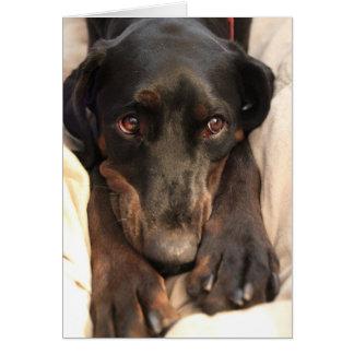 Gabby the Rescue Dog (Blank Card) Card