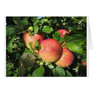Gala Apples Card