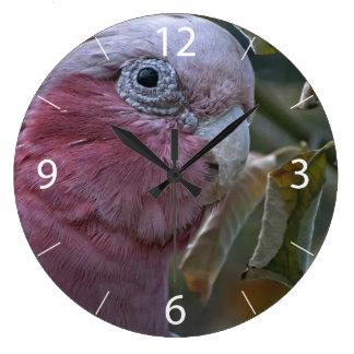 Galah Clock