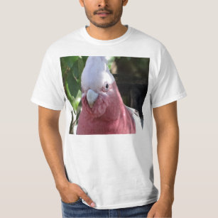 Rose Breasted Cockatoo Parrot Bird Clothing - Apparel, Shoes