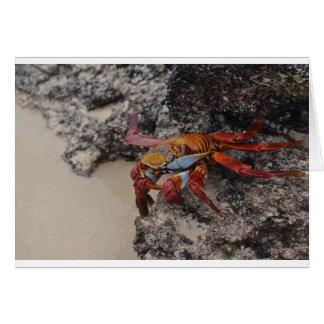 Galapagos2 Card
