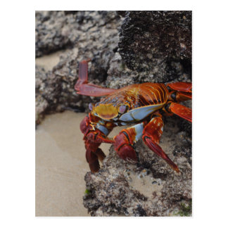 Galapagos2 Postcard