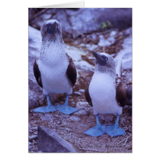 Galapagos Blue-Footed Birds Card