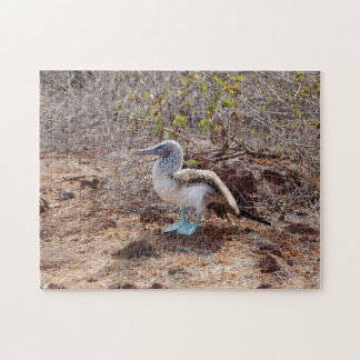 Galapagos blue-footed booby jigsaw puzzle