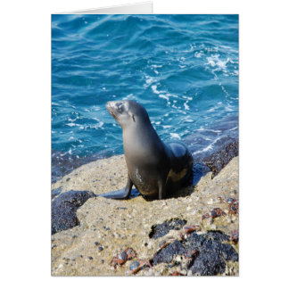 Galapagos Fur Seal Card