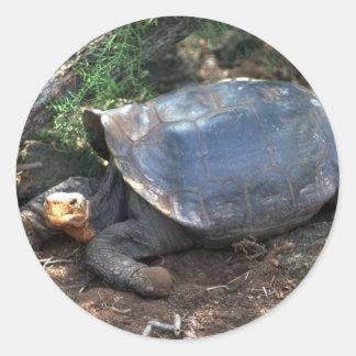 Galapagos Giant Tortoise (Saddle-Backed type) lyin Round Sticker
