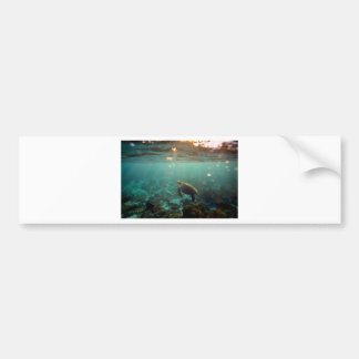 Galapagos green lagoon sea turtle underwater bumper stickers