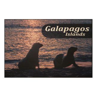 Galapagos Island Poster