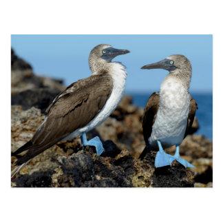 Galapagos Islands, Isabela Island Postcard