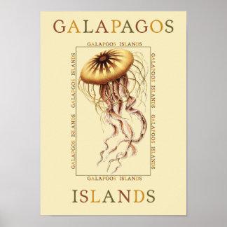 Galapagos Islands Jellyfish Poster