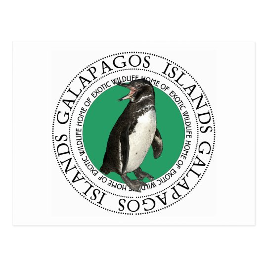 Galapagos Islands Penguin Postcard