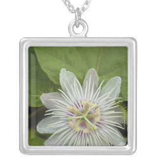 Galapagos Passion Flower Passiflora foetida Silver Plated Necklace
