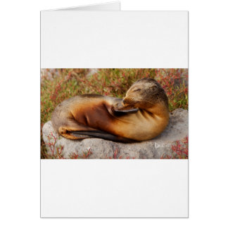 Galapagos Sea Lion Card