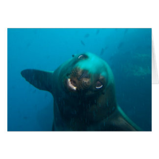 Galapagos Sea Lion Card