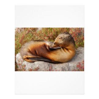 Galapagos Sea Lion Letterhead