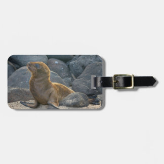 Galapagos sea lion luggage tag