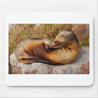 Galapagos Sea Lion Mouse Pad