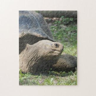 Galapagos Tortoise 586 Jigsaw Puzzle