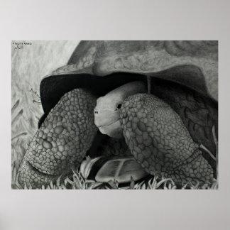 Galapagos Tortoise Poster