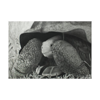 Galapagos Tortoise Stretched Canvas Print
