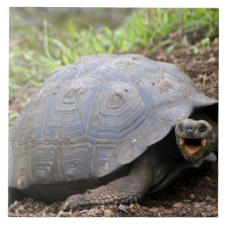 Galapagos Tortoise with mouth open Tile